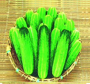Baromashi Cucumber