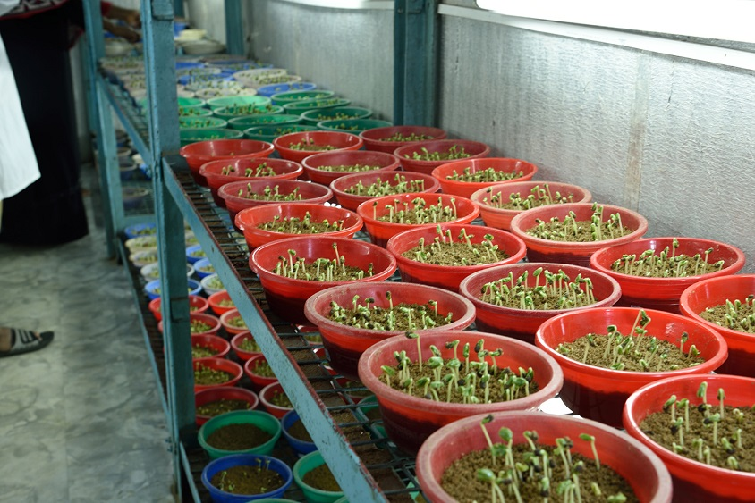 First R&D based seed company in Bangladesh
